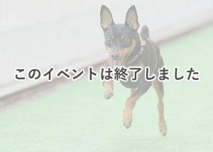 B612 de マルシェ vol.33 ~DOG STREET~