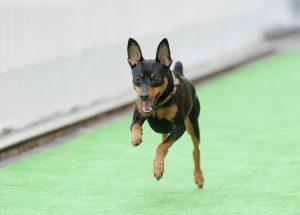 飛行犬撮影会&B612 de マルシェVol.36~DOG STREET~