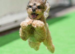 飛行犬撮影会の写真&データのお渡し開始!