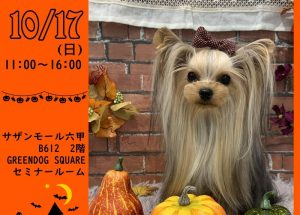 Wandayまーけっと~Halloween~【GREEN DOG SQURE内】