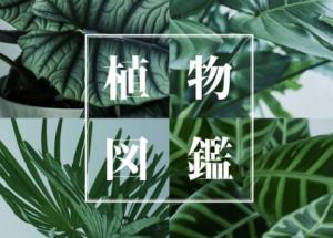 【ACTUS】植物図鑑